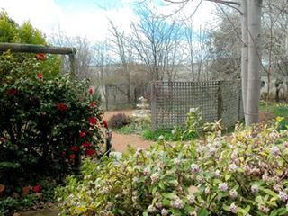 side garden- spring