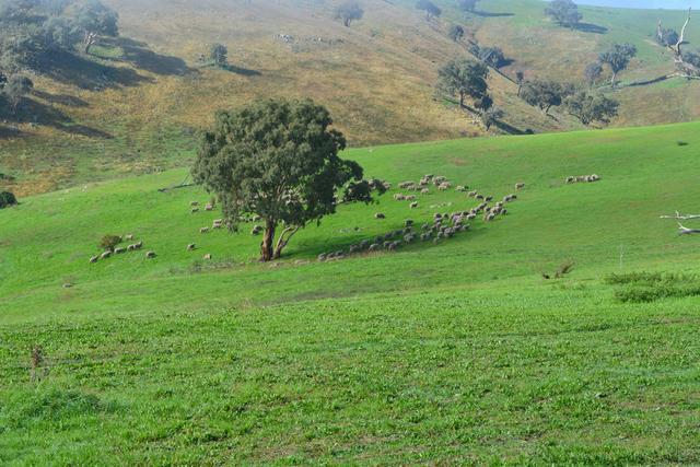 Blackmans Creek Road Bigga Via Crookwell, NSW 2583