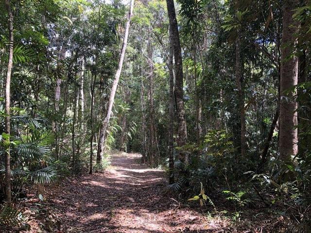36 Sanctuary Close, QLD 4881