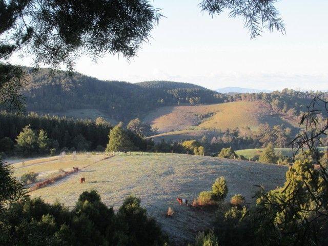 1545 Turtons Creek Rd, VIC 3960