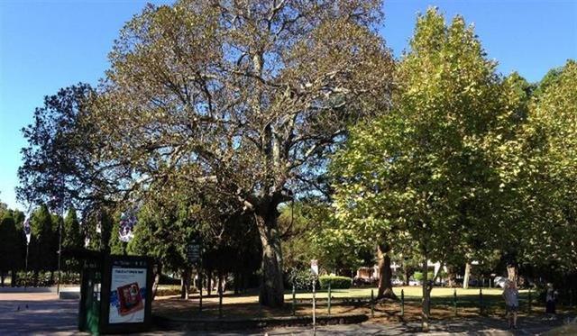 2/183 Alison Road, NSW 2031