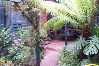 Courtyard ferns